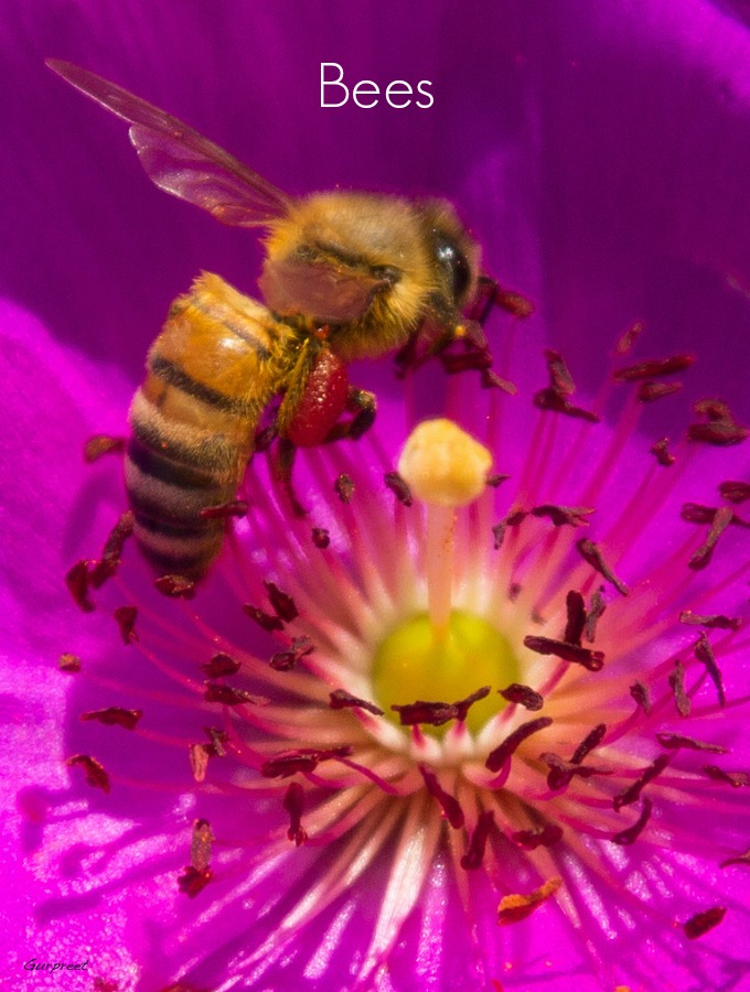 Bees will help pollinate many of your flowers