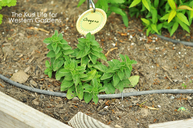 5 Reasons you need Drip Irrigation www.westerngardens.com