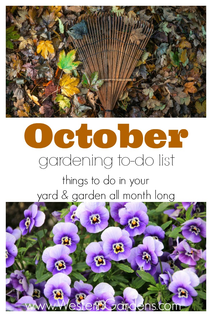 October Gardening To-Do List
