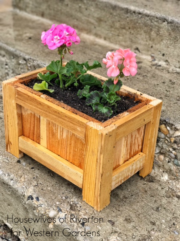 western gardens have geraniums for your planter box