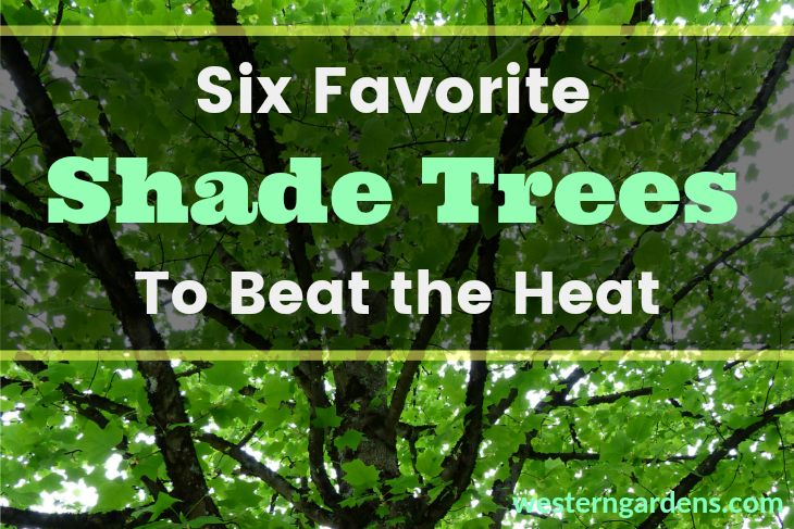 Discover favorite shade trees to cool you off.