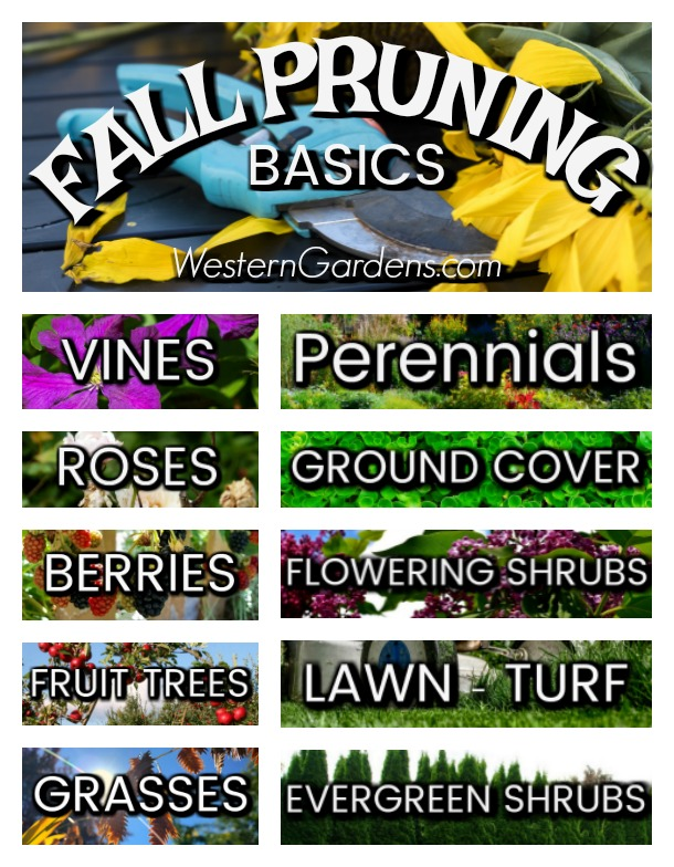 Follow these simple guidelines for fall pruning your garden and yard.
