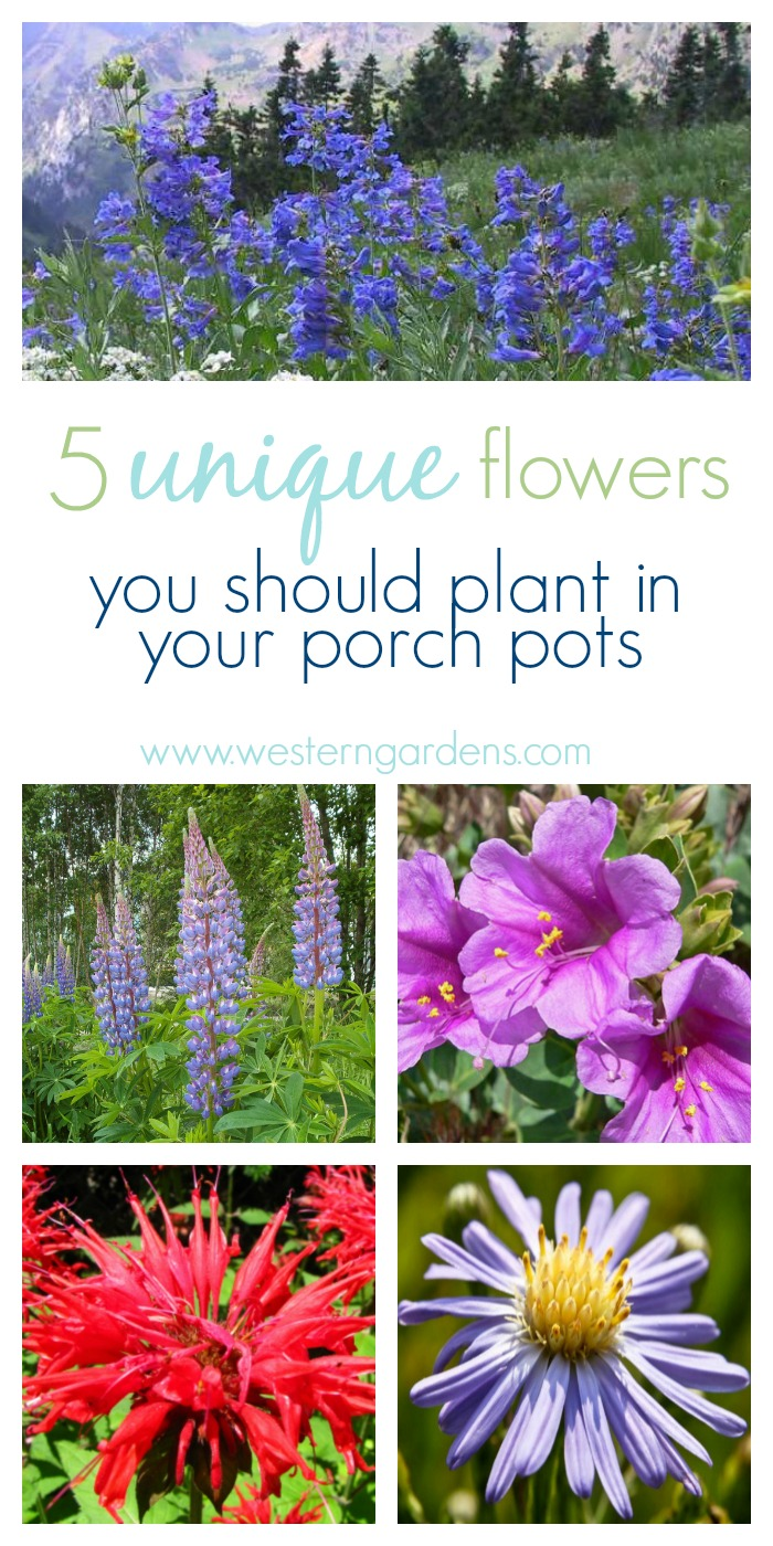 Need some beautiful, new plants for your porch pots? Try these 5 native Utah plants to freshen up your outdoor decor!