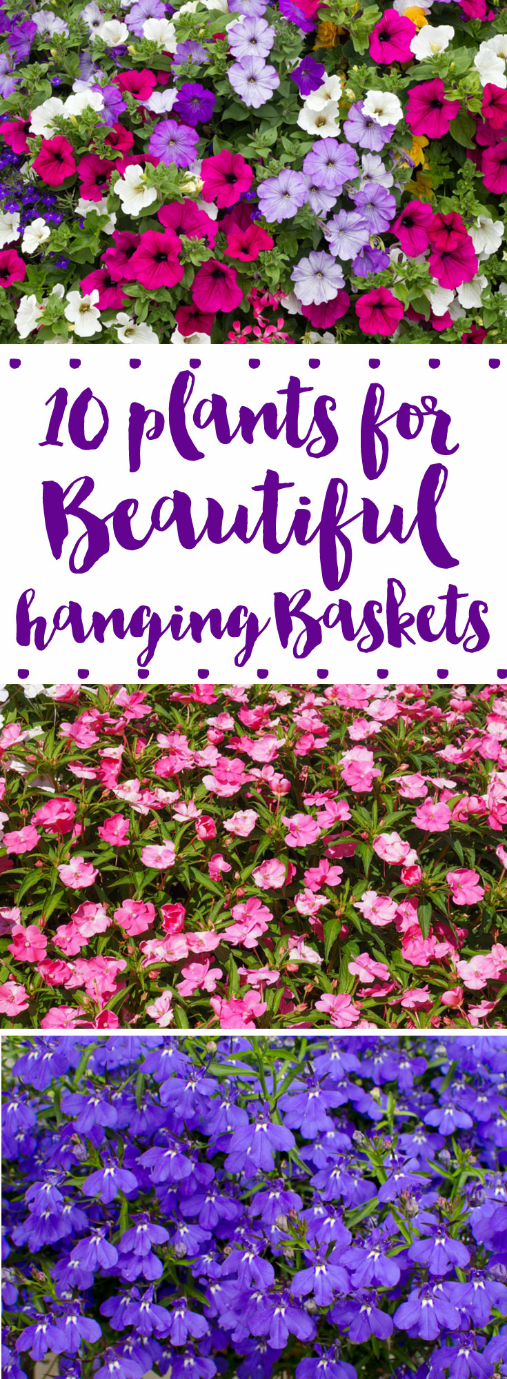 10 Flowers For Beautiful Hanging Baskets Western Garden Centers