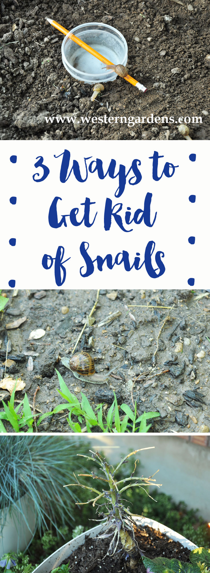 3 easy & cheap Ways to Get Rid of Snails, safe for pets and wildlife! www.westerngardens.com