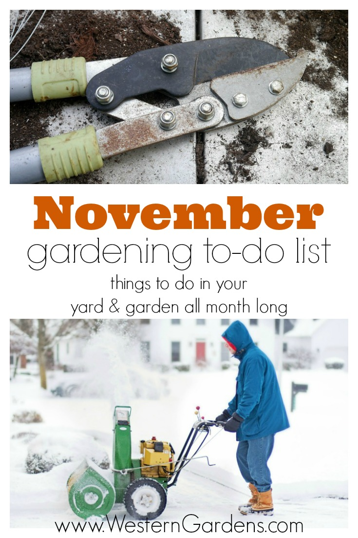 November Gardening To-Do List