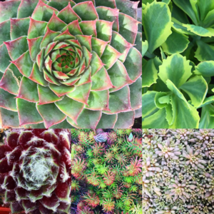 western gardens has a wide variety of succulents