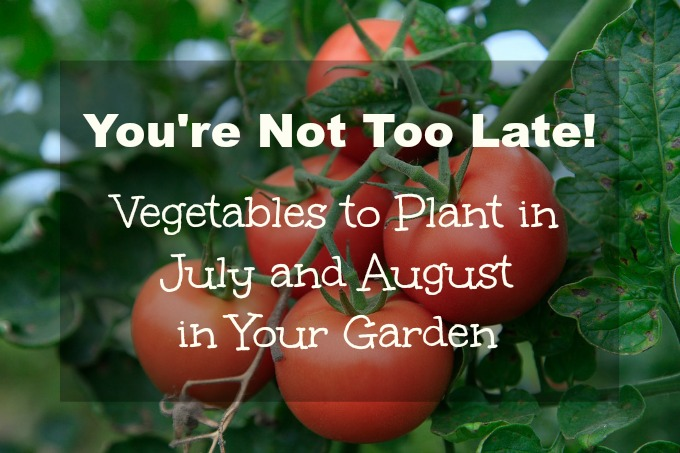 It's not too late to plant a vegetable garden in July and August.