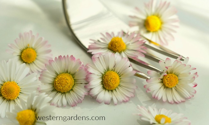 Eat some tasty daisies.