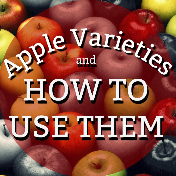 A basic breakdown of most popular apples and how to use them best.